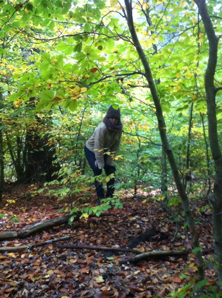 Searching for porcnini mushrooms