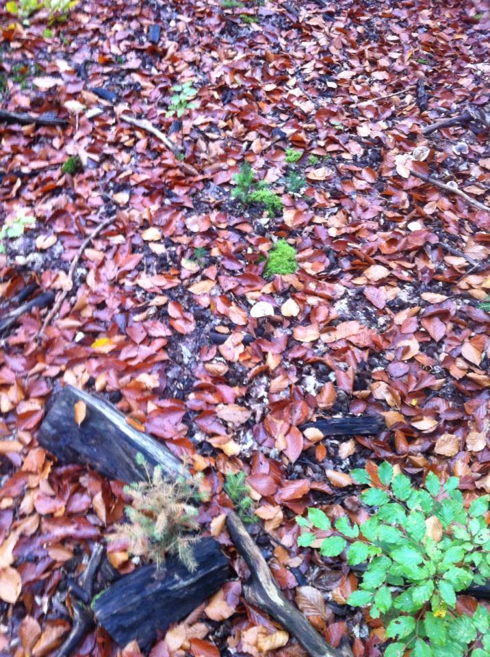 Forest mushrooms
