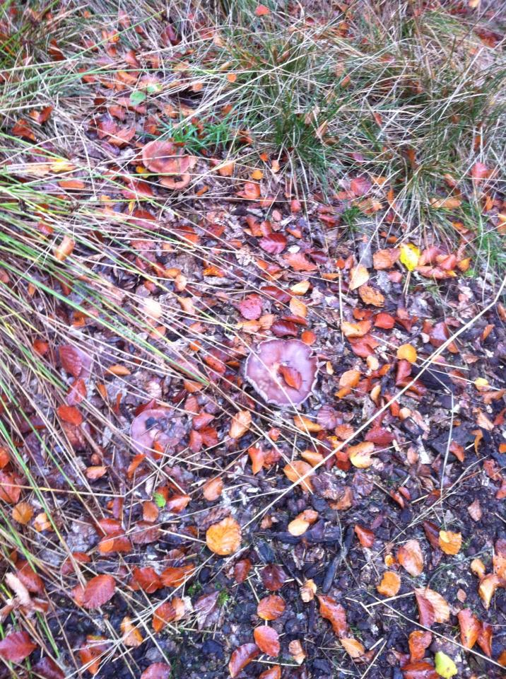 Spot the mushrooms among the leaves
