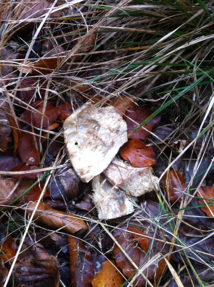 Half eaten porcini mushroom in the forest