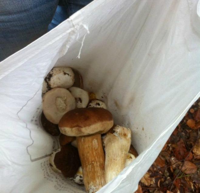 stone mushroom harvest