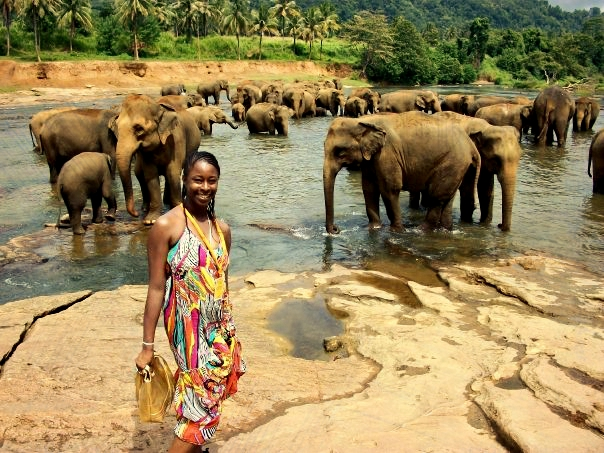 adventureswithbea.com elephants