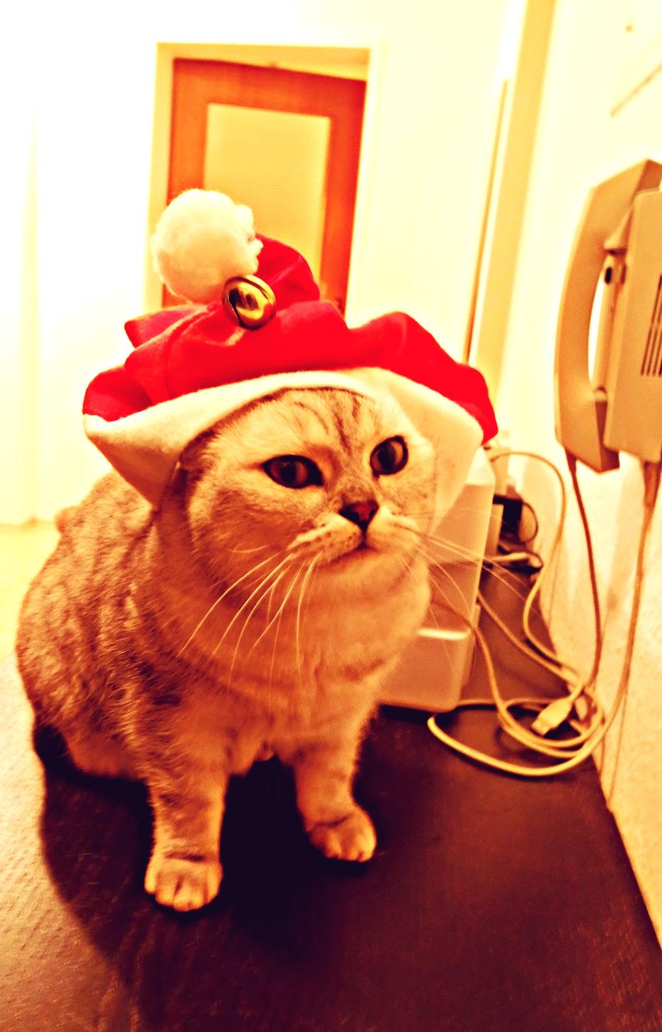 Annie in a Santa hat