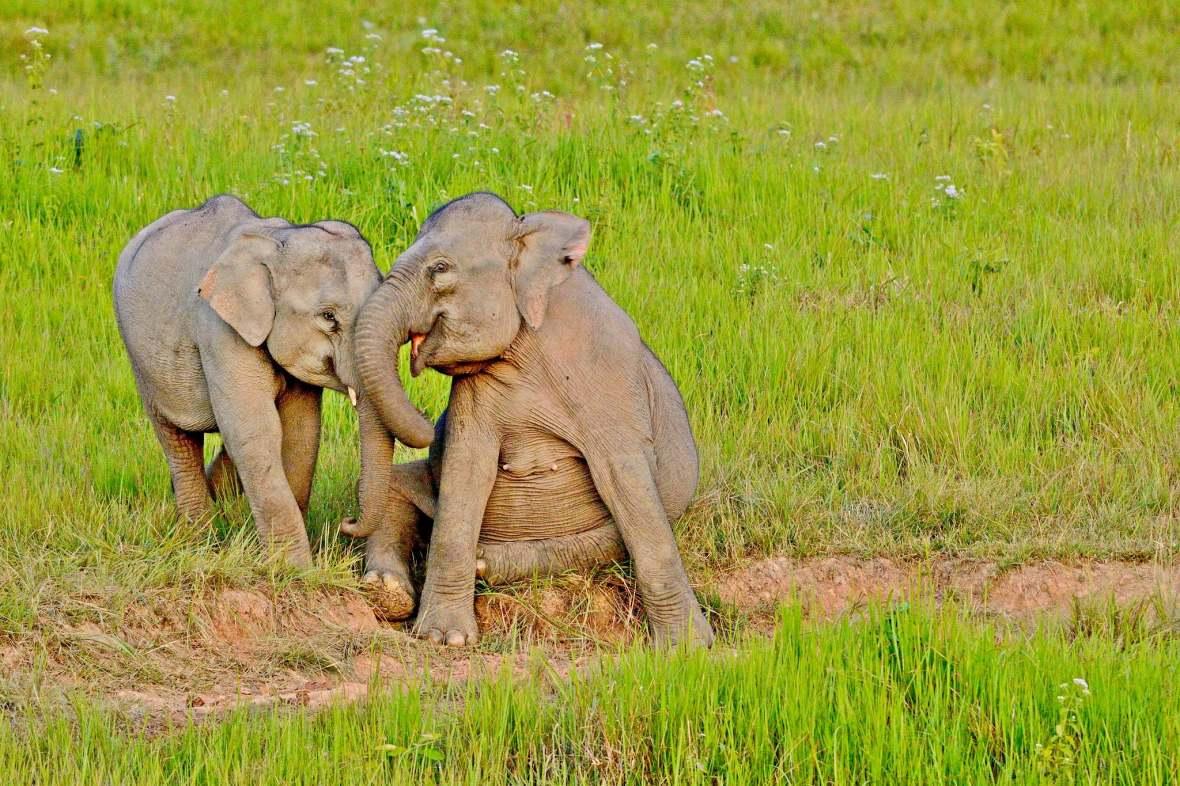 elephants in khao yai
